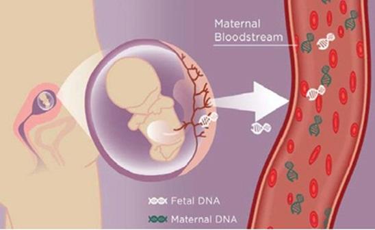 Il DNA fetale passa nel circolo materno